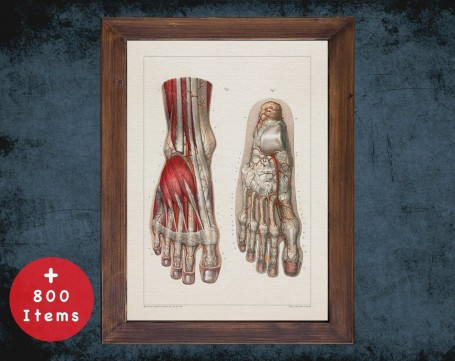 Anatomy art, FOOT VEIN MUSCLE, medical student gift, Podiatrist and Podiatry, doctor office decor