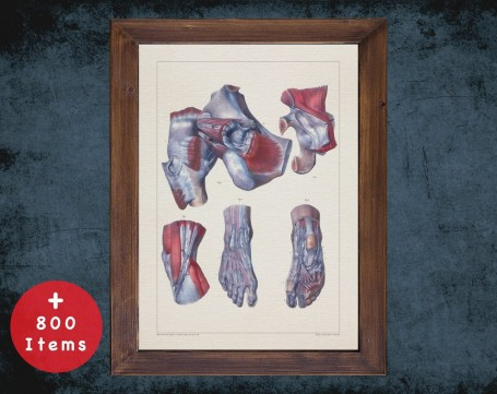 Anatomy art, FEET KNEE HIP, medical student gift, Podiatrist and Podiatry, doctor office decor