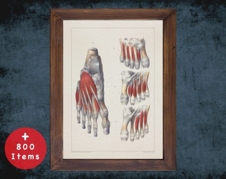 Anatomy art, FEET TOES MUSCLE, medical student gift, Podiatrist and Podiatry, doctor office decor