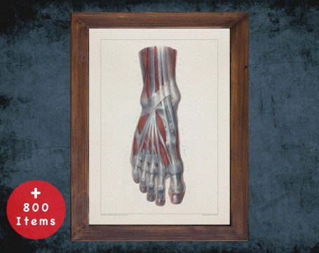 Anatomy art, FOOT TENDON MUSCLE, medical student gift, Podiatrist and Podiatry, doctor office decor