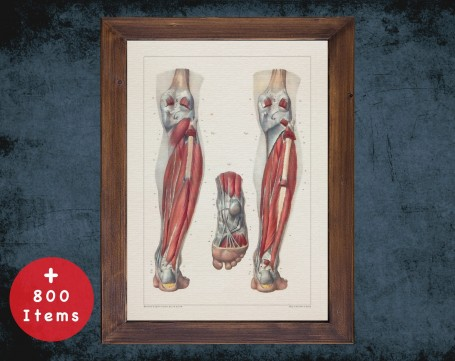 Anatomy art, ANKLE KNEE CALF, medical student gift, Podiatrist and Podiatry, doctor office decor
