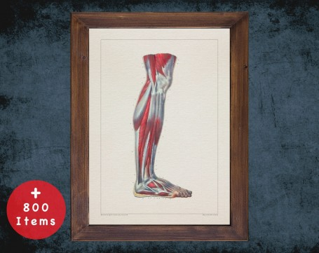 Anatomy art, FOOT KNEE CALF, medical student gift, Podiatrist and Podiatry, doctor office decor