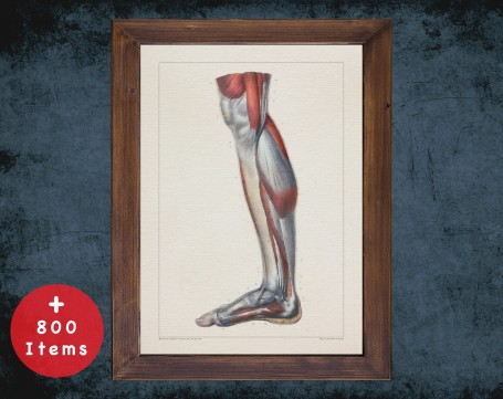 Anatomy art, FOOT TIBIA CALF, medical student gift, Podiatrist and Podiatry, doctor office decor