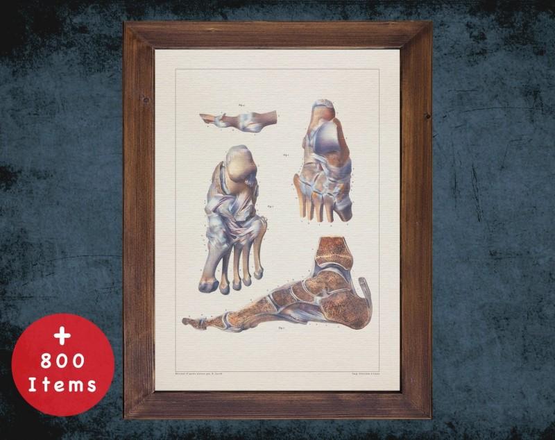 Anatomy art, FEET BONES ANKLE, medical student gift, Podiatrist and Podiatry, doctor office decor