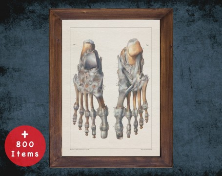 Anatomy art, FOOT BONES TENDON, medical student gift, Podiatrist and Podiatry, doctor office decor