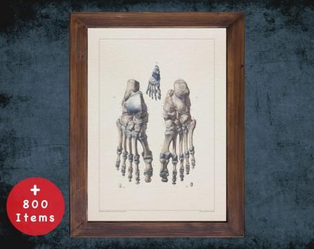 Anatomy art, FEET BONES TOE, medical student gift, Podiatrist and Podiatry, doctor office decor