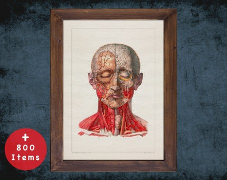 Anatomy art, HEAD TRACHEA MUSCLE, medical student gift, Chiropractor and Chiropractic, doctor office decor