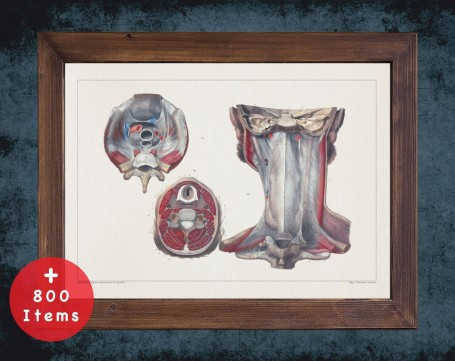 Anatomy art, SPINAL CORD VERTEBRA, medical student gift, Chiropractor and Chiropractic, doctor office decor