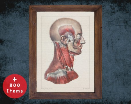 Anatomy art, HEAD EAR MUSCLES, medical student gift, Chiropractor and Chiropractic, doctor office decor