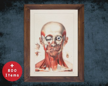 Anatomy art, HEAD EYES MUSCLES, medical student gift, Chiropractor and Chiropractic, doctor office decor