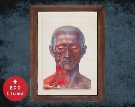 Anatomy art, HEAD MUSCLE EYES, medical student gift, Chiropractor and Chiropractic, doctor office decor