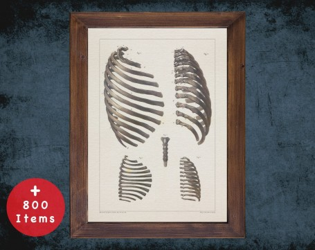 Anatomy art, RIB CAGE SKELETON, medical student gift, Chiropractor and Chiropractic, doctor office decor