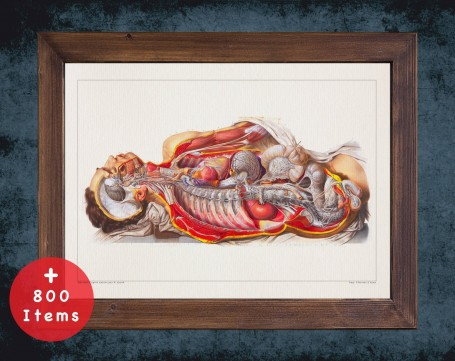 Anatomy art, STOMACH INTESTINE LIVER, medical student gift, Gastroenterologist and Gastroenterology, doctor office decor
