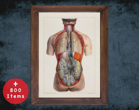 Anatomy art, STOMACH LIVER INTESTINE, medical student gift, Gastroenterologist and Gastroenterology, doctor office decor