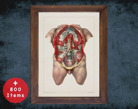 Anatomy art, CHEST ARTERY RIB, medical student gift, Gastroenterologist and Gastroenterology, doctor office decor