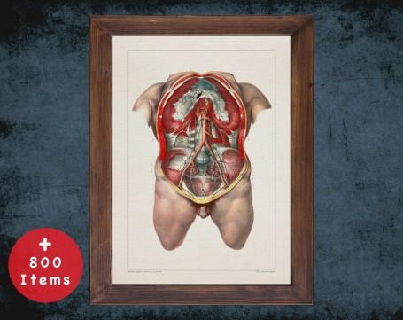Anatomy art, CHEST ARTERY RIB, medical student gift, Gastroenterologist and Gastroenterology, doctor office decor