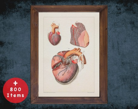 Anatomy art, HEART VENTRICLE TISSUE, medical student gift, cardiologist and cardiology, doctor office decor