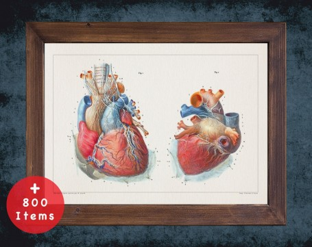 Anatomy art, HEART VENTRICLE ARTERY, medical student gift, cardiologist and cardiology, doctor office decor