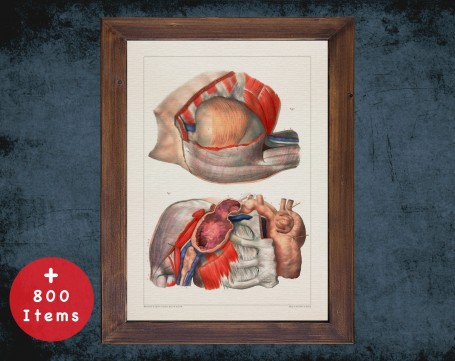 Anatomy art, HEART SHOULDER MUSCLE, medical student gift, cardiologist and cardiology, doctor office decor