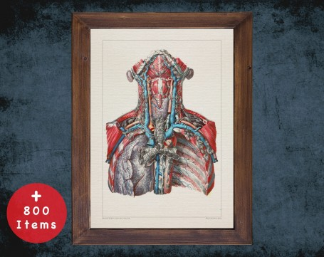 Anatomy art, CAROTID ARTERY LUNG, medical student gift, cardiologist and cardiology, doctor office decor