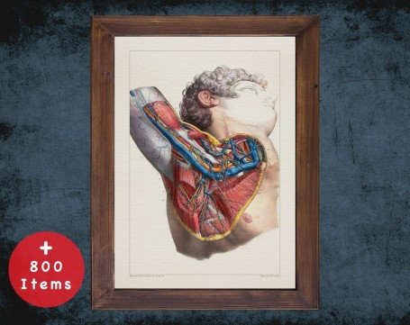 Anatomy art, SUBCLAVIAN ARTERY SHOULDER, medical student gift, cardiologist and cardiology, doctor office decor