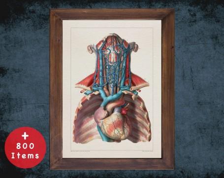 Anatomy art, CAROTID ARTERY HEART, medical student gift, cardiologist and cardiology, doctor office decor
