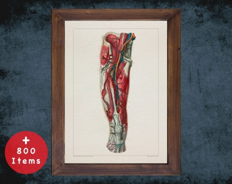 Anatomy art, FEMORAL ARTERY THIGH, medical student gift, cardiologist and cardiology, doctor office decor