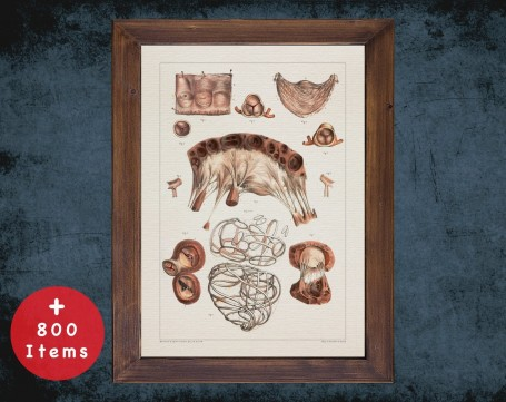 Anatomy art, MITRAL VALVE HEART, medical student gift, cardiologist and cardiology, doctor office decor