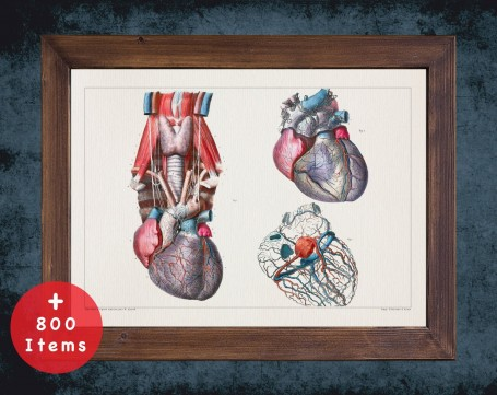 Anatomy art, artery ventricle heart, medical student gift, cardiologist and cardiology, doctor office decor