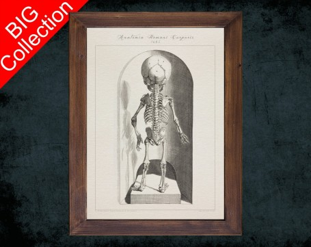 Human Anatomy, medical student gift,, doctor office decor, BABY SKELETON BACK anatomical poster
