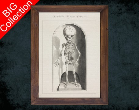 Human Anatomy, medical student gift,, doctor office decor, BABY SKELETON FRONT anatomical poster