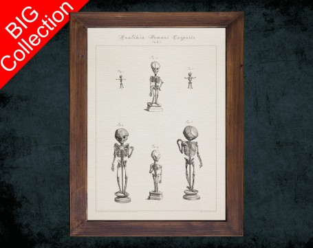Human Anatomy, medical student gift,, doctor office decor, BABY CHILD SKELETON anatomical poster