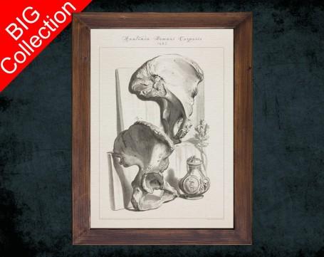 Human Anatomy, medical student gift,, doctor office decor, PELVIS ILIUM ISCHIUM anatomical poster