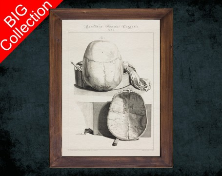 Human Anatomy, medical student gift,, doctor office decor, CRANIAL VAULT HEAD anatomical poster