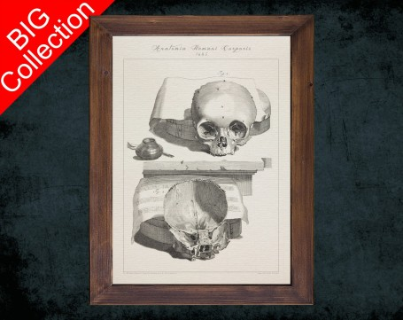 Human Anatomy, medical student gift,, doctor office decor, SKULL BRAIN HEAD anatomical poster