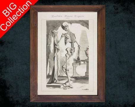 Human Anatomy, medical student gift,, doctor office decor, HUMAN SKELETON BONES anatomical poster