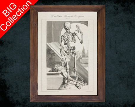 Human Anatomy, medical student gift,, doctor office decor, HUMAN SKELETON BODY anatomical poster