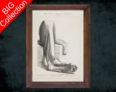 Human Anatomy, medical student gift,, doctor office decor, SOLE ARCH FOOT anatomical poster