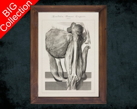 Human Anatomy, medical student gift,, doctor office decor, FEMUR KNEE PATELLA anatomical poster