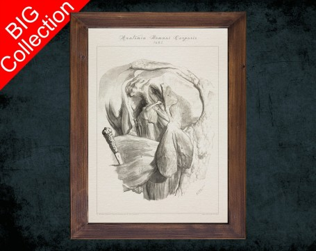 Human Anatomy, medical student gift,, doctor office decor, HIP FEMUR MUSCLE anatomical poster
