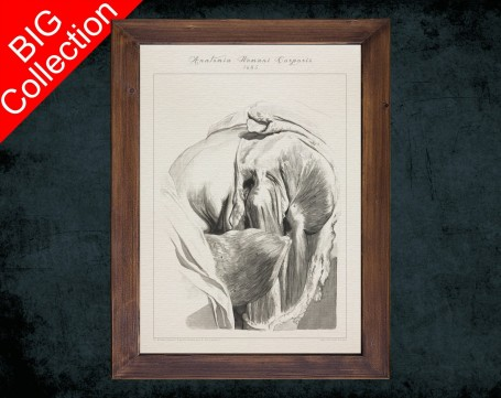 Human Anatomy, medical student gift,, doctor office decor, HIP BONES MUSCLE anatomical poster