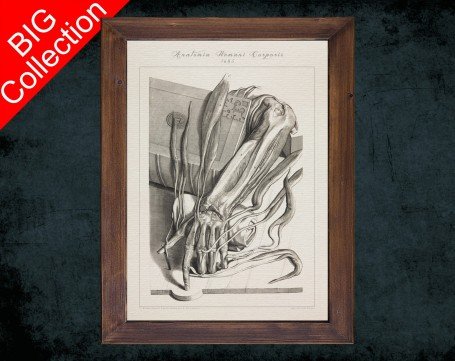 Human Anatomy, medical student gift,, doctor office decor, RADIUS CUBITUS ULNA anatomical poster