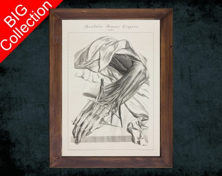 Human Anatomy, medical student gift,, doctor office decor, HAND FINGER TENDON anatomical poster