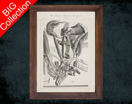 Human Anatomy, medical student gift,, doctor office decor, WRIST HAND MUSCLE anatomical poster