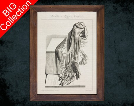 Human Anatomy, medical student gift,, doctor office decor, ARM TENDON LIGAMENT anatomical poster