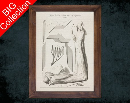 Human Anatomy, medical student gift,, doctor office decor, ARM FOREARM MUSCLE anatomical poster