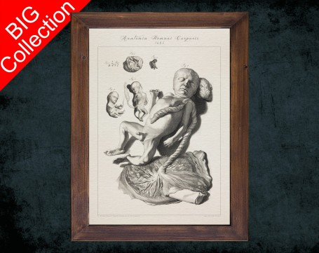 Human Anatomy, medical student gift,, doctor office decor, PLACENTA FOETUS BABY anatomical poster