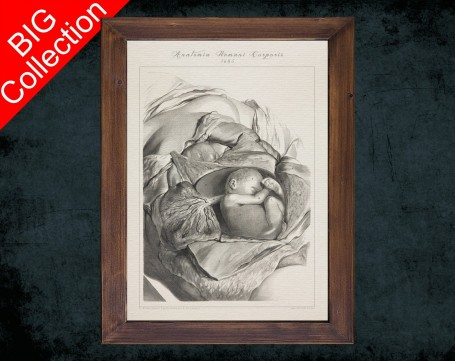 Human Anatomy, medical student gift,, doctor office decor, PLACENTA UMBILICAL CORD BabY anatomical poster