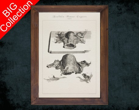 Human Anatomy, medical student gift,, doctor office decor, CERVIX FORNIX UTERUS anatomical poster