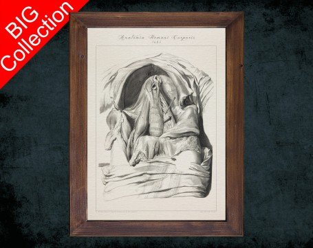 Human Anatomy, medical student gift,, doctor office decor, THORACIC DIAPHRAGM ARTERY anatomical poster